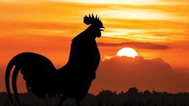 Photo of Kebaikan Bangun Pagi