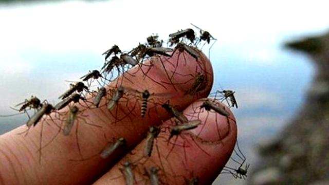 Enam Penyakit karena Gigitan Nyamuk