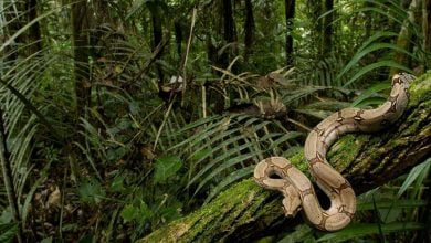 Hutan Kalimantan